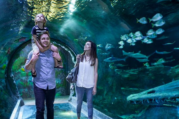 A list of the best ways to buy LEGOLAND California discount tickets that can include SEA LIFE Aquarium and LEGOLAND Water Park, too.